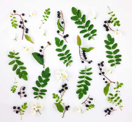 Colorful bright pattern of green leaves, black berries and flowers on white background. Flat lay, top view, view from above 스톡 콘텐츠