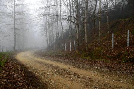 フォレスタルの道は、イランの北の Lavij の森で、午後には、太陽がダウンしていたし、道路になった霧春の初期の頃に撮影