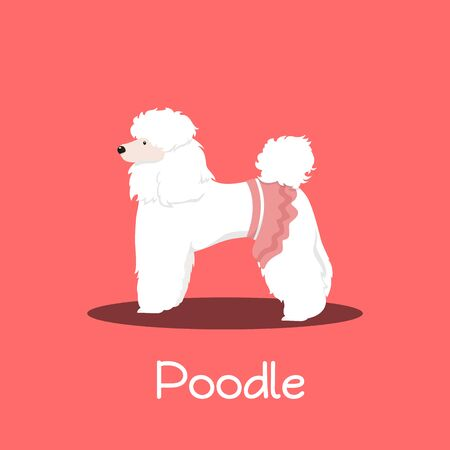 A cute Poodle dog cartoon on pink background.vector