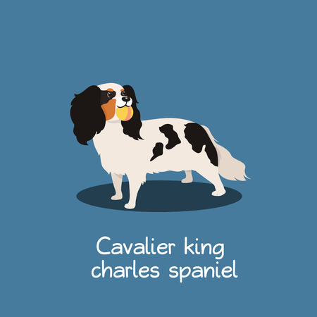 Cavalier king charles spaniel dog illustration design