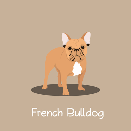 French Bulldog pet cartoon standing illustration design