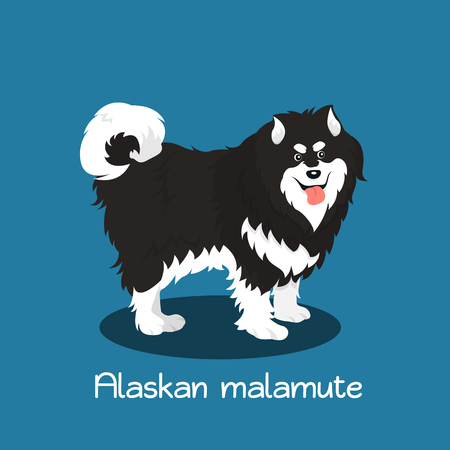 An illustration depicting a cute Alaskan malamute dog cartoon.vector
