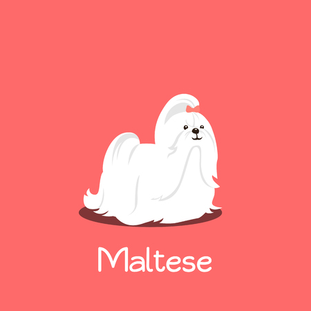An illustration depicting a cute Maltese dog cartoon.vector