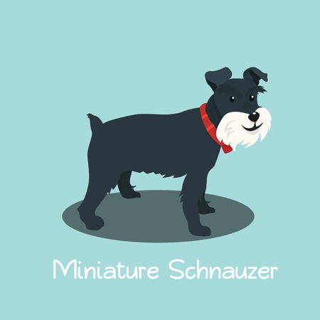An illustration depicting Miniature Schnauzer dog cartoon.vector Ilustracja