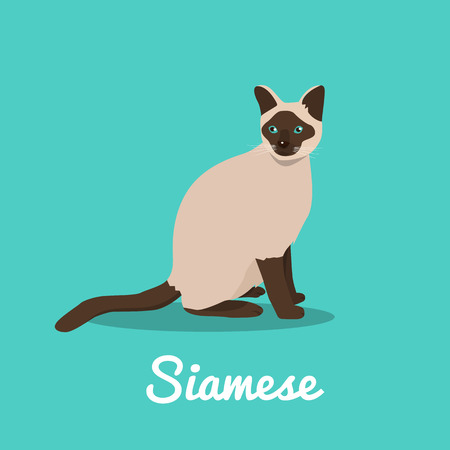 Siamese cat illustration on sky blue background.vector  イラスト・ベクター素材
