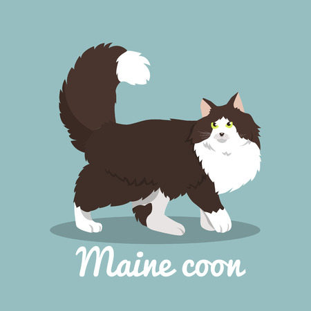 Maine coon cute cat illustration on sky blue background.vector Иллюстрация