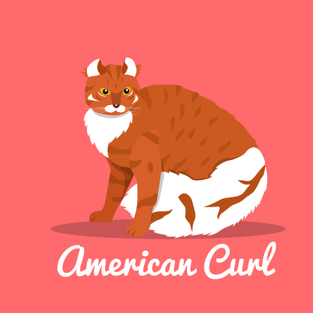 American curl cat illustration on pink background.vector