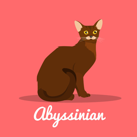 Brown Abyssinian cat illustration on pink background.vector