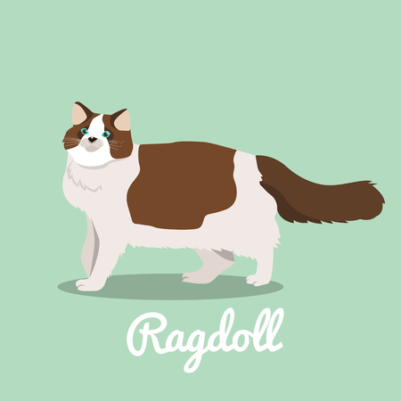 Ragdoll cat looking something illustration.vector