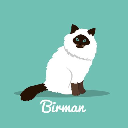 Birman cute cat with green eyes illustration design.vector