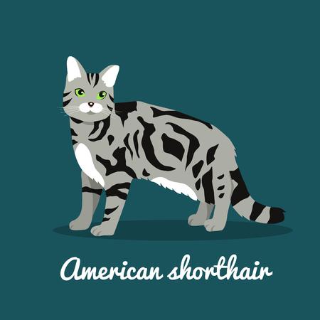 American shorthair cat pet is standing illustration design.vector Illustration