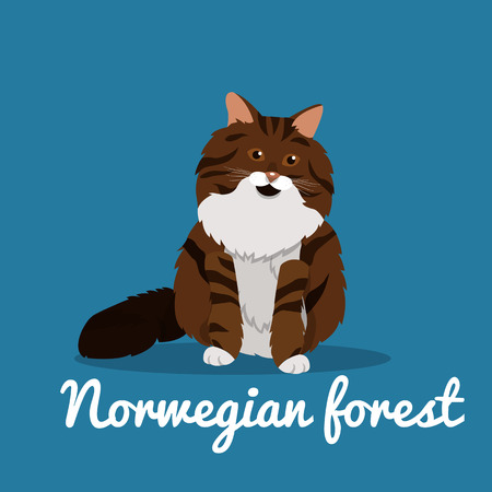 Norwegian forest cute cat animal illustration.vector Illustration