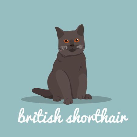 British shorthair with red eyes sitting on sky blue background