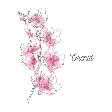 Pink orchid illustration on white background Vettoriali