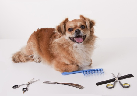 This photo shows a dog sitting on the manicure table.  photo