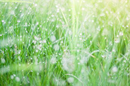 dewdrop: Dewdrop and grass