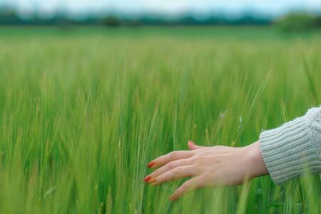 the hand on the background field of green wheat Stock fotó