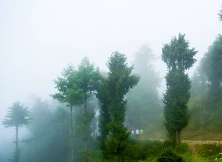 enveloped: 3 people walking on a montain path, surrounded by green trees as they are enveloped by fog