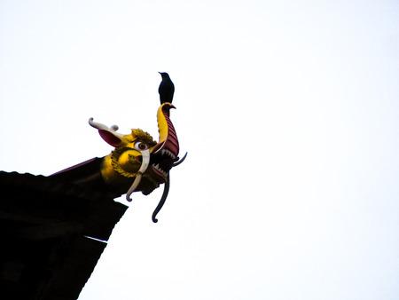 waterspout: uccello appollaiato su una tromba a forma di drago isolato su uno sfondo bianco sovraesposto