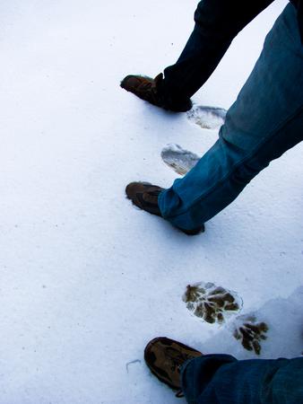 freshly fallen snow: Fare orme sulla neve fresca. Tre piedi facendo profonde impressioni nella neve appena caduta Archivio Fotografico