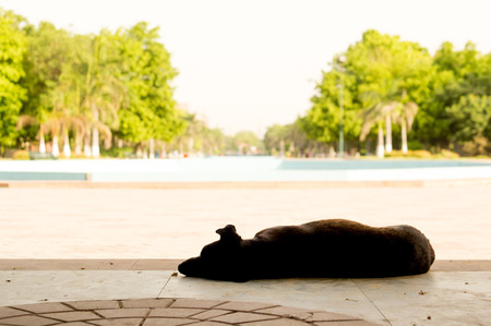 sweltering: Dog sleeping in the shade on a hot summer day in gurgaon india.