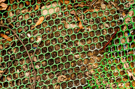 chicken cage: Hexagonal mesh on dead leaves on the ground Stock Photo