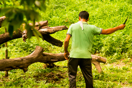 clearing the path: Man with a machete clearing a path in the forest to take back wood. Wood is usually still taken from forests to cook food and construct homes in villages.