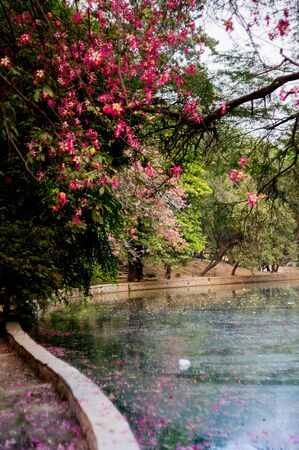 frigid: Lake bordered by trees with pink flowers in Lodhi Garden India. Beautiful place on a chilly winter morning