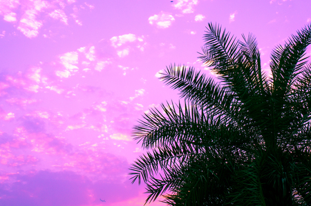 Palm tree against a purple sky during dusk with clouds dotting the sky