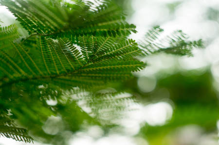 wilds: Green leaves shot with a very shallow depth of field and beautiful bokeh. Perfect for nature based topics Stock Photo