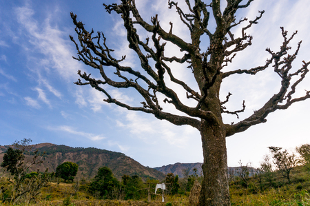 Dead tree in front of mountains on a grassy field