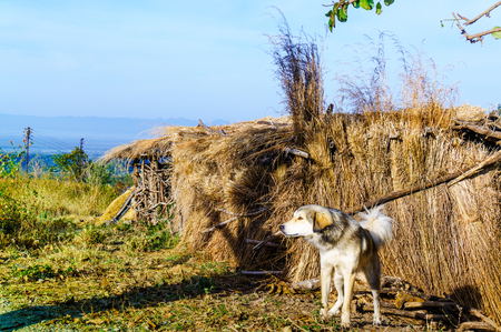 Dog guarding a straw hut in the mountains
