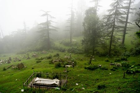 shot of a foggy graveyard on a hill slope with trees in the background fading into the distance. Stok Fotoğraf - 132970650