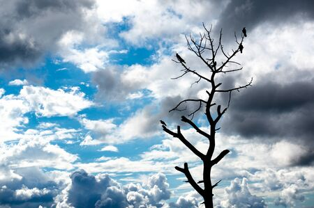 Silhouette of bare tree with birds sitting on it with clouds in the background shot in McLeodganj Himachal pradesh india Stock fotó