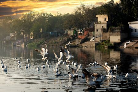 seagulls on a river at yamuna ghat in delhi during the early morning sunrise Stock Photo