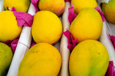 shot of ripe yellow green mangoes placed on white paper and covered with think pink butter paper ready to sell and serve