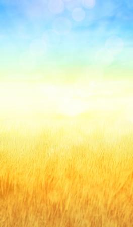 weizen ernte: l�ndlichen Hintergrund