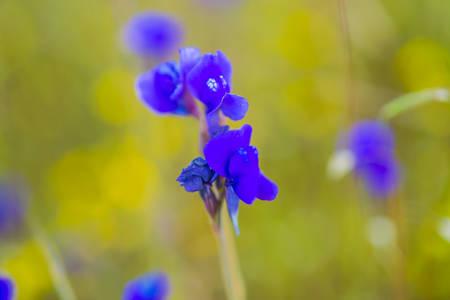 Beautiful purple flower in the meadow. photo