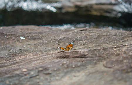 beautiful rare: beautiful rare butterfly. Stock Photo