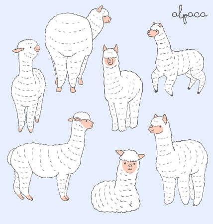 llama: Alpaca set Illustration