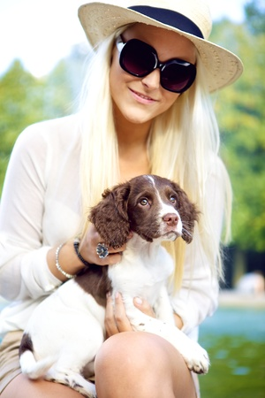 springer: Alert adorable pet dog cradled on the lap of a beautiful blonde woman in sunglasses. Stock Photo