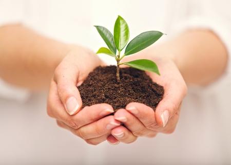 若い植物の成長する土壌中での女性の手
