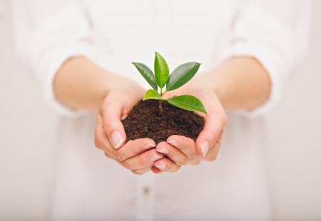 여자의 손을 잡고 젊은 식물, 생태 개념