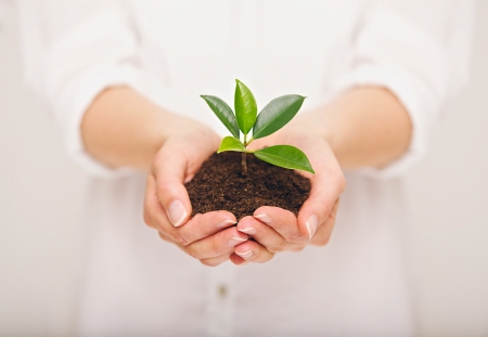 Womans hand holding young plant, ecology concept