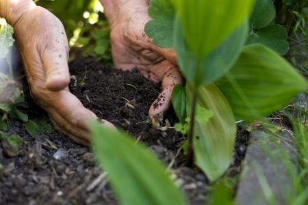 turba: Primer plano de jardinero mujer plantar la planta en el jardín
