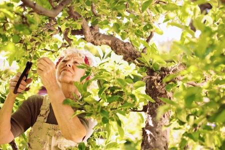 mujeres trabajando: Cortar los brotes secos del árbol superior de la mujer