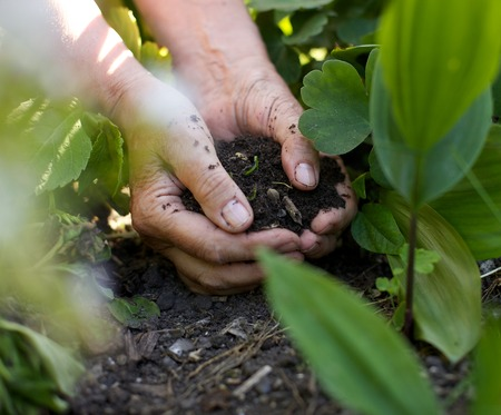unrecognized: Closeup image of a female hands with soil working in garden Stock Photo