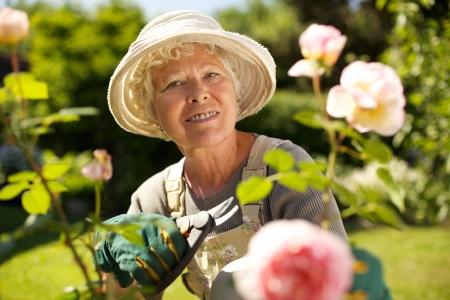 Senior vrouw met een snoeischaar te kijken naar je lacht in haar tuin. Oude vrouw tuinieren op een zonnige dag. Stockfoto