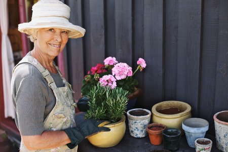 Active senior woman potting some plants in terracotta pots on a counter in backyard. Senior female gardener planting flowers in pots photo