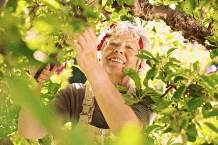 elder tree: Happy elder woman pruning dried buds from the tree. Senior lady gardening in her farm smiling